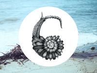 C  Sea Letter
