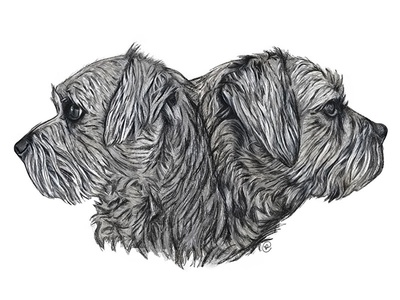 Border Terrier Profiles - Digital Art