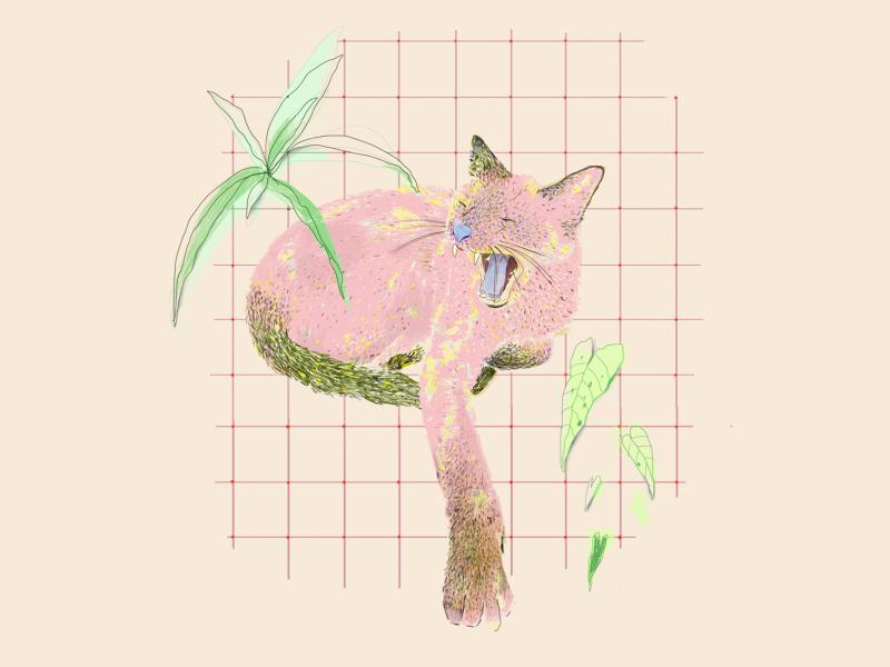Sofi's cat. tropical dibujodigital cool design illustration art colors illustration colores ilustraciondigital ilustración digital illustration