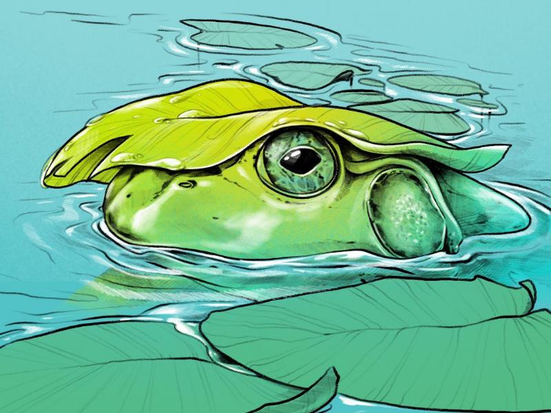 Ribbbit illustration lilypad lily pad nature illustration nature procreate digital illustration amphibian pond frog