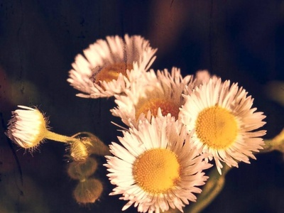 Wonderful Nature Things photography flower nature