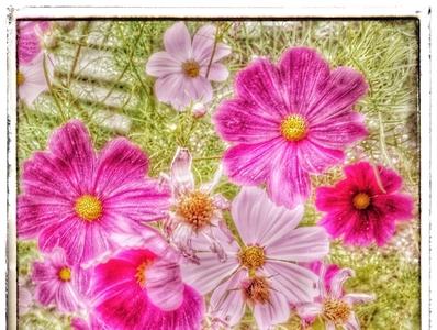 Nature Color farben color nature