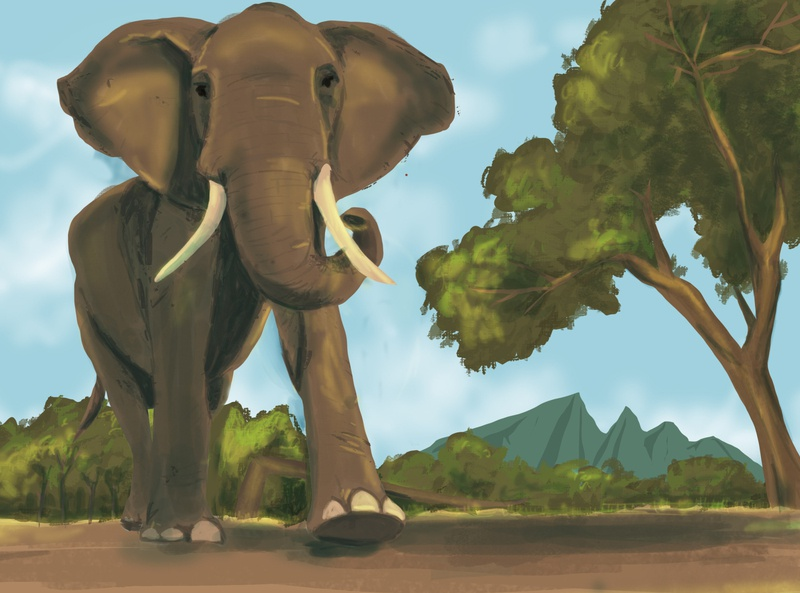 Elephant illustration animal elephant illustration elephant illustration art digital illustration illustration
