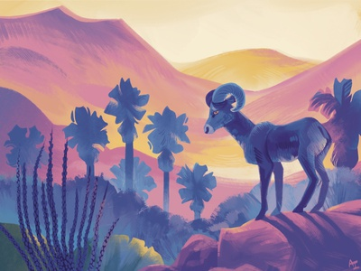 Anza Borrego Bighorn Sheep nature southern california desert illustration desert nature illustration animal illustration procreate illustration wildlife illustration wildlife california state parks anza borrego bighorn sheep