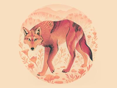 Calavera Coyote digital art drawing warm wolf poppies animals california wildlife nature procreate illustration coyote