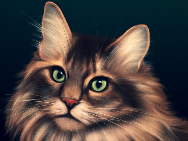 A Cat Portrait procreate art artist art drawing illustration procreate animal art animal illustration animals pets pet cats cat