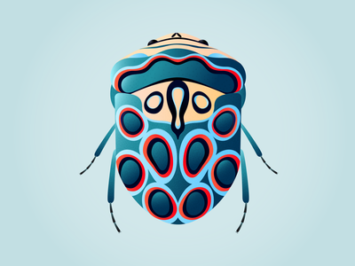 Picasso Bug nature illustration botanical illustration bug picasso bug minimal illustration editorial illustration