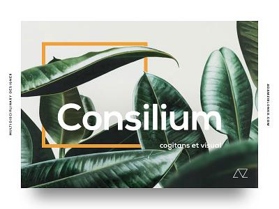 Designer's Card card palm plant nature scandinavian design designer minimal ux ui