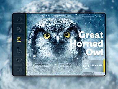 Concept Landing Page interface dailyui coder nature owl graphic design developer landingpage visiva ui  ux ux user experience userinetrface ui css html webdesigner webdesign website uxdesign