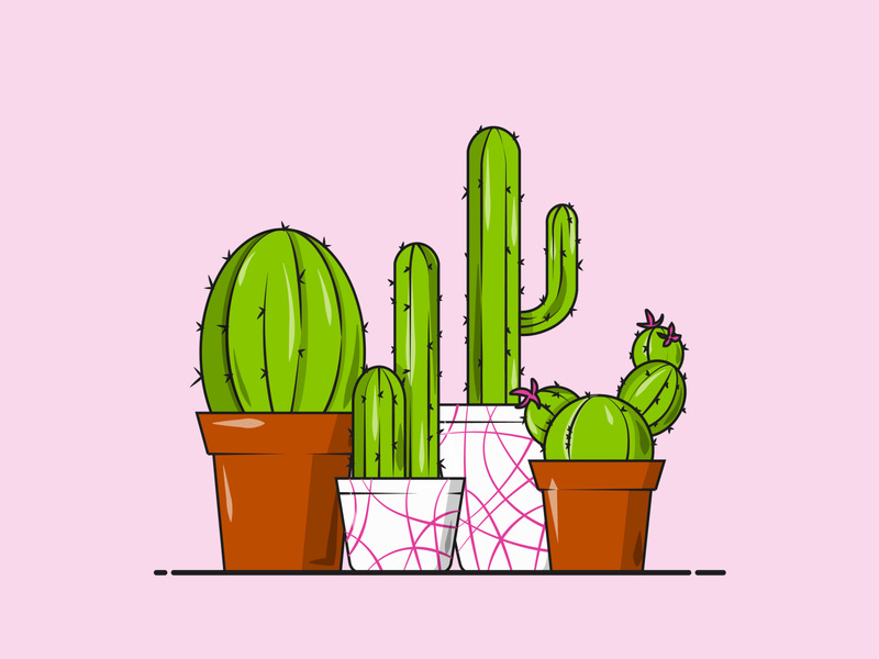 Flat Vector Illustration Series inspiration design garden green pink cactus flower graphicdesign flat illustration flat vector plants prickly flowerpot cactus cacti
