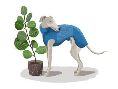 Cosy Boy dog colour hand drawn design drawing nature garden plants pet adoption italian greyhound greyhound whippet pet portrait pet business pet character digital art cartoon digital illustration