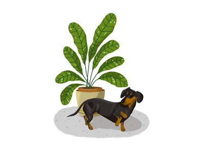 Dachshund and Plant
