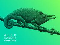 Engraving Chameleon