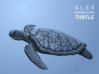 Engraving Turtle