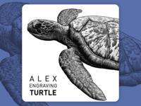 Engraving Turtle detail