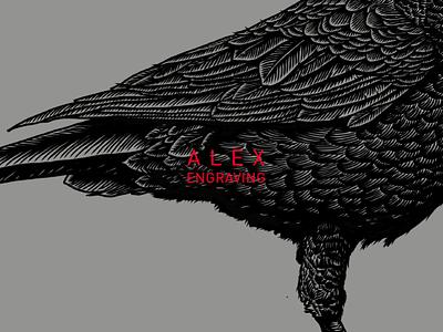 crow detail detail crow graphic drawing print paintig engraving illustration
