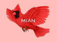 Mian Bird 01