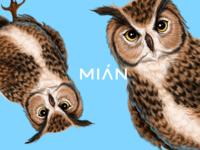 Mian Bird