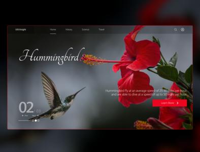 Hummingbird minimal banner design digital design red mockup design concept design fly flower hummingbirds interfacedesign carousel interface uiux ui webdesign website landingpage hummingbird