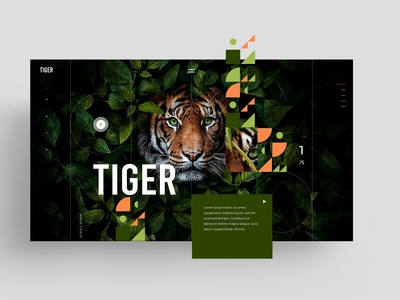 WEBSITE - UX - TIGER