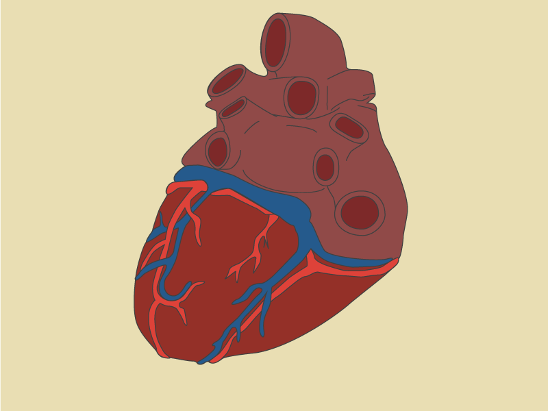 Heart Color Test color test icon anatomy
