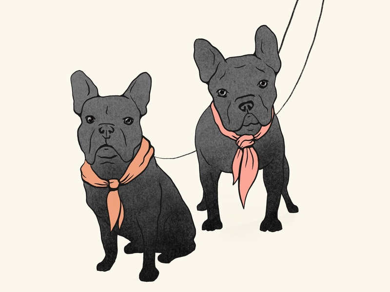 Two Frenchies procreate art dog illustration editorial illustration frenchy illustration frenchy french bulldog illustration animal illuatrtion animal illustrator