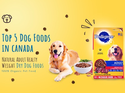 dog food banner ui design food banner banners banner design pet food banner dog food banner