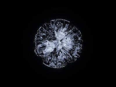 Looped sphere