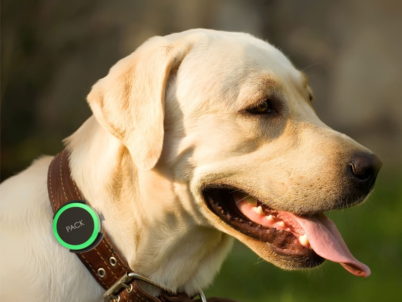 Pack: A collar-based wearable for dogs wireframes process 3d modeling dogs wearable ios app