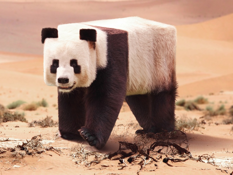 Minecraft in real life photoshop art pandas panda cube manipulation photoshop minecraft