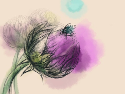 A Midsummer Night's Dream flower plant fly summer procreate design drawing illustration