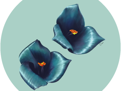 Flowers Study I chilean nature art flower illustration flowers full color colors photoshop illustration digitalart