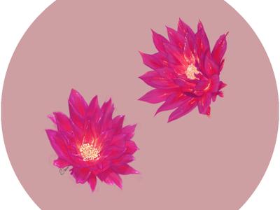 Flowers Study II pink flower illustration nature art colors flowers chilean full color photoshop illustration digitalart