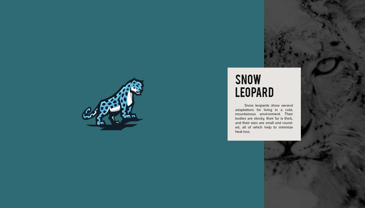 Mine snow leopard