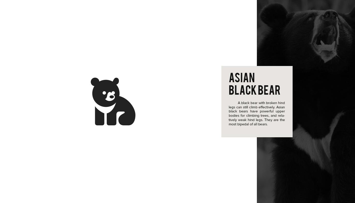Mine asian black bear