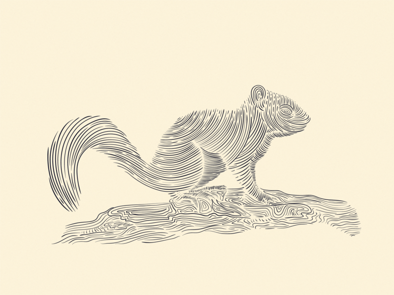Squirrel ink drawing squirrel illustration penandinkdrawing vintage illustration vintage logo vintage design linework lineart squirrel inking engraving vintage drawing ink digital drawing pen and ink hand drawn illustrator illustration art illustration digital illustration