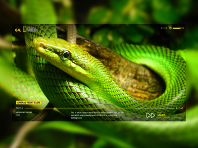 PollUX TV App 1.0 yellow tv application app snake green faivre damien pollux ui ux