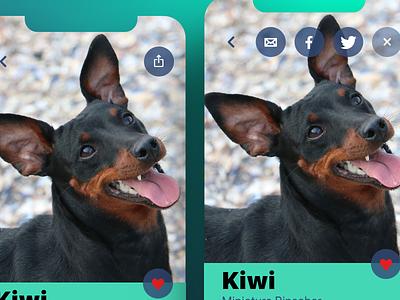 Daily UI 010 Social Share app design pet adoption pet social share social 010 ux design daily ui dailyui
