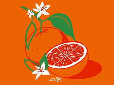 Waiting for summer botanical oranges procreate illustration