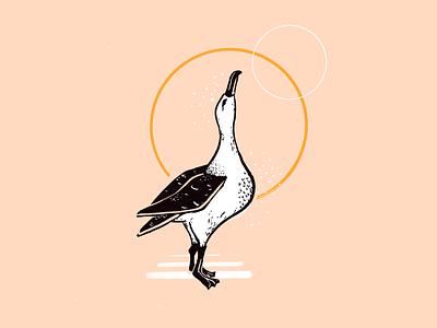 Albatross animal bird illustration