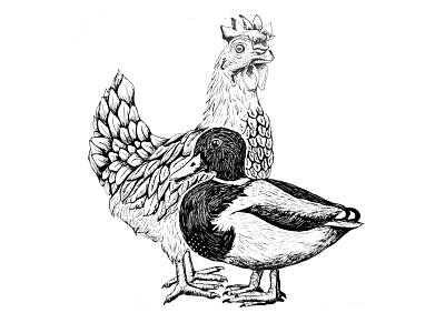 Poultry ink duck chicken birds illustration