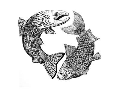 Fish whitefish salmon ink fish illustration