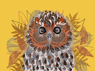 Hot Cocoa Owl design branding coffee cup grapic design birds owl illustration
