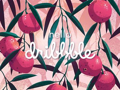 Hello Dribbble australian plant fruit foliage quandong botanical illustration debut