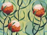 Dryandra Illustration