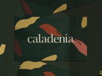 Caladenia Business Card