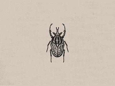 Goliath Beetle entomology insect illustration beetle goliath