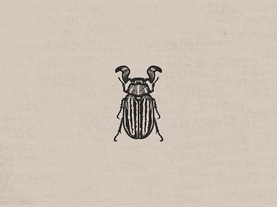 June Beetle vector illustration insect entomology beetle