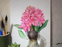 Hyacinthus Orientalis L