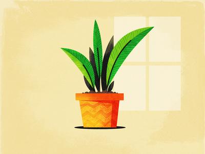 Plant..